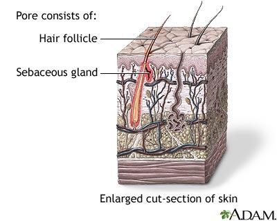 black hair follicle